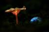 Pilz-mit-Schneckenhaus (Skodiar) Tags: fungi pilze moshroom darkness makro macro