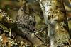 057 (3) Evening Feeding (srypstra) Tags: annashummingbird feeding chick nest tsehumharbour