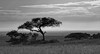 The Region I Love Most (AnyMotion) Tags: siringitu massai maasai theendlessland endlessplains endloseebene morukopjes tree baum clouds wolken savannah savanna savanne landscape landschaft 2018 anymotion serengetinationalpark tanzania tansania africa afrika travel reisen nature natur 7d2 canoneos7dmarkii bw blackandwhite sw landschaftsaufnahmen