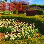Toronto Ontario ~ Canada ~ Edwards Gardens ~ Botanical Garden thumbnail