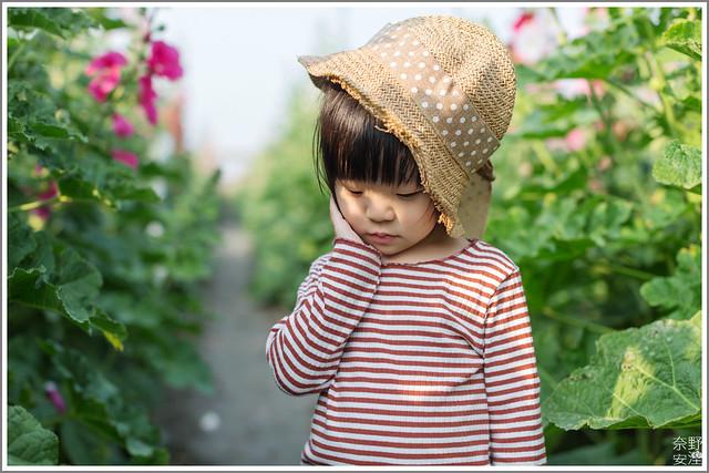 3月台南 親子寫真可以這樣拍 木棉花 蜀葵 小麥 一次讓你拍個夠 (47)