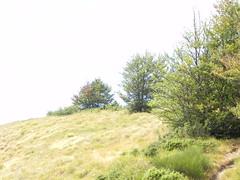 DSCN9841 (Gianluigi Roda / Photographer) Tags: apennines summer latesummer 2012 mountains woods trees rocks landscapes trekkingpaths appenninobolognese appennino