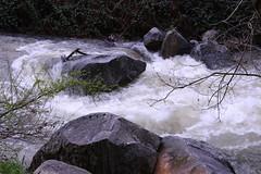 Deer Creek in Nevada City, CA (qorp38) Tags: creek raging white water