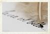 La vie est belle... (Maria Godfrida) Tags: macromondays backintheday feather pen plume macro closeup letters write quillpen 7dwf
