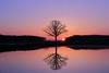 IMG_8338 (geraldtourniaire) Tags: 24105l sonnenaufgang 6d eos6d baum natur franken landschaft spiegelung