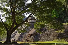 20180329 México (4) R01 (Nikobo3) Tags: centroamérica méxico chiapas palenque ruinas selva travel viajes culturas naturaleza nikon nikond800 d800 nikon247028 nikobo joségarcíacobo paisajes arquitectura architecture