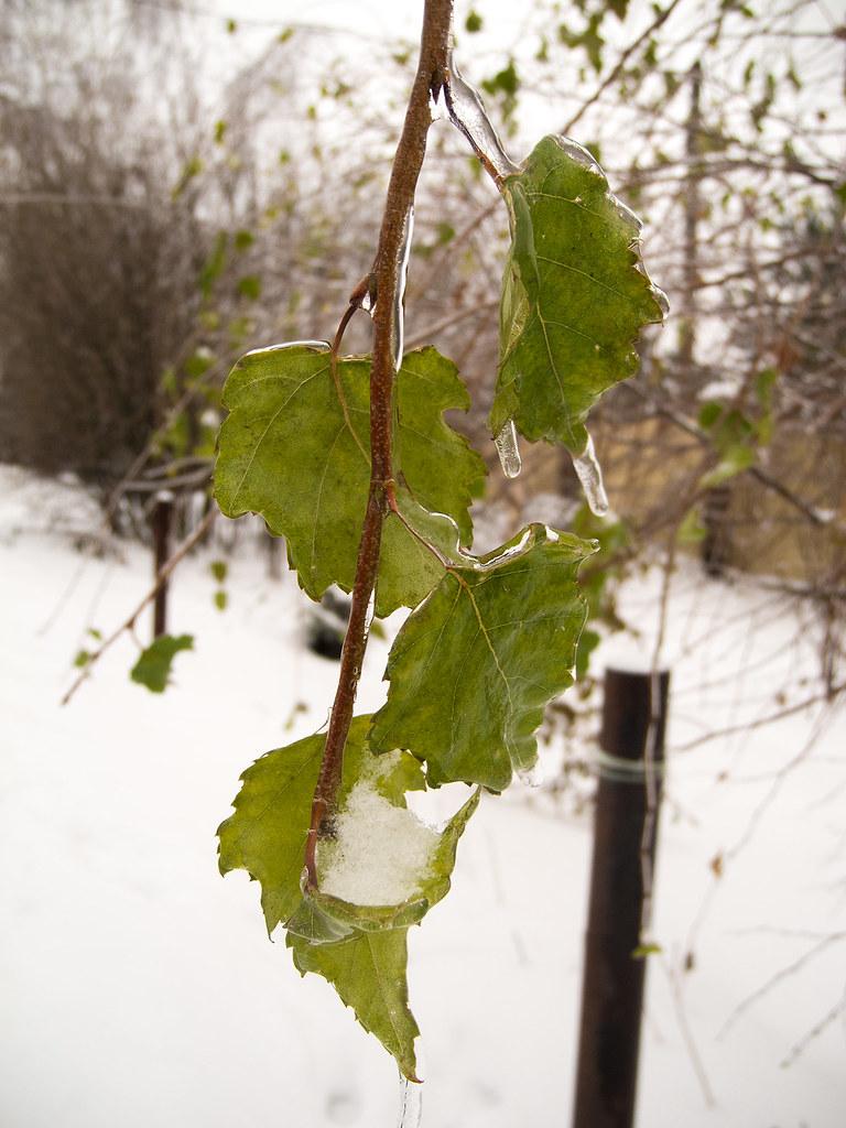 фото: Зимнее #3