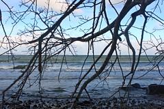 Am Binzer Steinstrand (lt_paris) Tags: urlaubinbinz2018 rügen äste bäume meer ostsee steinstrand binz