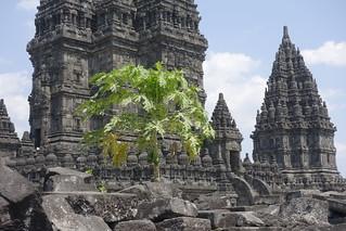 INDONESIEN, Java, hinduistische Tempelanlage Prambanan, 17356/9900