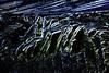 Ice-bird (De Rode Olifant) Tags: icebird marjansmeijsters quote sjaejones