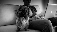 Visiting my brother (D.Stankevicius) Tags: dog blackwhite home brother fuji fujifilm fujimagic kaunas lithuania