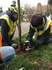 IMG_0237 (Urban Forestry) Tags: woodlawn tree treeteam prune pruning