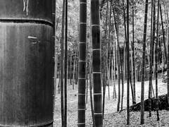 (szélléva) Tags: nippon kyōtoshi kyōtofu japan bamboo forest blackwhite bnw bw abstract 2017 texture
