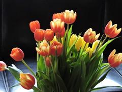 3: 21 March 2018 (keepps) Tags: switzerland suisse schweiz flower flora tulip bouquet 365photos