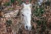 Hello ! (gerardcarron) Tags: animaux arbres canon80d faune hiver nature savoie winter cheval horse challesleseaux