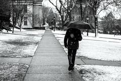 Brown University (Alex Szymanek) Tags: brown university snow weather season black white need want imagine march left path walk street college after enter like picoftheday dark light depth field simple 2018 change all this space very important clear front one only lonely above umbrella quiet silent chill build buildings trees storm live explore study student last wet water freeze cold