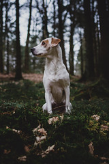 adventure day   l  2018 (weddelbrooklyn) Tags: haustier hunde hund tier tiere pet dogs animals dog animal green leaves leaf woods nature grün blätter blatt d5200 nikon 35mm mönkloh wald natur