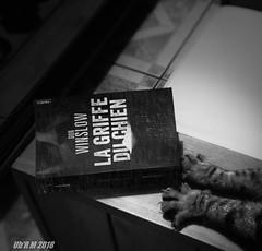 Cat Nightmare (Ub R M) Tags: hubertmarrone lgg4 lgh815 nb ubrm black blackandwhite blanc book cat cauchemard chat horreur humour kinghubi lecteur lecture livre monochrome nightmare noir noiretblanc prédateur reader