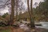 Y entre los árboles... (Amparo Hervella) Tags: ríoiruelas paisaje árboles agua río naturaleza roca puente color nube largaexposición d7000 nikon nikond7000