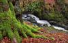 River Devon (PJ Swan) Tags: green moss mossy rumbling bridge gorge water river devon stream burn