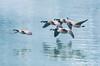 Something Speical here. (Omygodtom) Tags: wildlife bird nature nikon70300mmvrlens d7100 lens flickr existinglight explorer flickriver