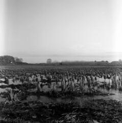 Rice field in March (odeleapple) Tags: mamiya c330 mamiyasekor 65mm kodaktmax100 film monochrome analog rice field paddy march spring