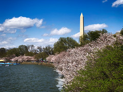Cherry Blossoms in Washington, DC (` Toshio ') Tags: toshio washingtondc washington dc tidalbasin cherryblossoms water lake tree flowers washingtonmonument spring clouds iphone usa people boats paddleboat