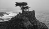 Stormy Morning At The Lone Cypress (chasingthelight10) Tags: events photography travel landscapes ocean sunrise rockformations places california pebblebeach lonecypress otherkeywords dawn fog mist