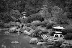 Japanese Tea Garden (t conway) Tags: