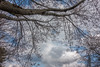 DSC00171 (johnjmurphyiii) Tags: 06416 clouds connecticut cromwell originalarw shelly sky sonyrx100m5 spring usa yard johnjmurphyiii