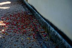 Spring colors by HarQ Photography - XT1G1107-L FUJIFILM X-T1 7artisans 50mm f1.1 *
