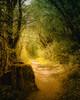 Waldweg - forest path (Felix Ott) Tags: würzburg forest trees light sunlight rock path green yellow waldweg wald bäume grün gelb braun äste branches nature natur