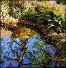 Reflections of the Day (Chris C. Crowley) Tags: reflectionsoftheday pond water reflections foliage plants trees sugarmillgardens park portorangeflorida nature outdoors garden botanical