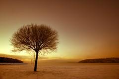 Lonely tree (stbea101) Tags: sweden stockholm mälaren sätra sätrastrandbadet mist tree