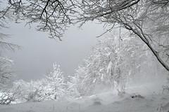 Imperfection (matteo.buriola) Tags: friuli prealpi carniche monte celant snow landscape nature nikon d3100 tree