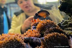Nemo ist wieder da🐡👍😉 (patric.gangler) Tags: aquaristik tiere fische karstadtpassagesaarbrücken tierfotografie animalsphotography unterwegsinsaarbrücken nikonfotografie nikonphotography nikonphotographers 1nikkor185mmf18 nikon1 nikon1j3