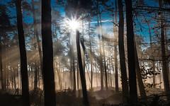 Breaking through the mist (Steppenwolf33) Tags: mist sunrise forest steppenwolf33 trees backlighting berlin köpenick