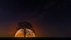 Moonbeam (mr.wohl) Tags: moon moonbeam baum mond mondaufgang sterne stars