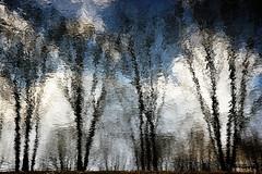 reflection (Darek Drapala) Tags: reflection reflects color unreal sun sunset dump panasonic poland polska panasonicg5 nature water waterscape waterreflects lumix light trees