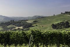Terre del Barolo_Y3A9416 (candido33) Tags: barolo lamorra paesaggidelvino piemonte serradenari alba aurora filari vigne vigneti vitigni