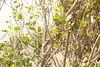 singes preah vihear2 (Joh Pik) Tags: preahvihear prasatpreahvihear unesco patrimoinemondial patrimoinemondialedelunesco worldheritage thailande cambodge cambodia thai frontière frontier temple ប្រាសាទព្រះវិហារ prasatpreahvihea shiva bouddha buddha shivaïste templedepreahvihear asie culturel cultural templehindou hindutemple dângrêkmountains khmer empirekhmer unescoworldheritagesite suryavarman montsdangrek architecturekhmère