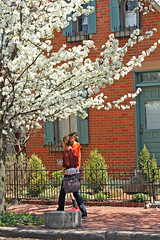 Walking in the Spring (craigsanders429) Tags: spring columbusohio columbusgermanvillage floweringtree people street streetscenes city cityscapes cityscenes trees