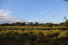 Outback (Bert#) Tags: australia ayers rock outback nature green blue sky travel