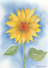 Sunflower watercolor (Sonia Aguiar (Mallorca)) Tags: watercolor watercolour wallart floralwatercolor flowers floral sunflower acuarela aquarell aquarelle art sunflowerart sunflowerpainting