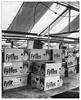 Fyffes (dam design) Tags: fyffes bananas newark market square place boxes nottingham nottinghamshire