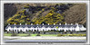 """The """"Twelve Apostles"""" (The Jacobite) Tags: house row 12 gorse arran island sea hill shore twelve apostle chimneys canon tamron600mm scotland window yellow"""