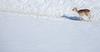 Daim (Pierre-R) Tags: parc polaire jura montagne neige animaux animal cerf daim biche renne bison nature paysage photo zoom soleil