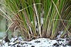 Down amongst the debris (Sandi (VERY busy - back soon )) Tags: shootaboot debris leaves grasses snow pov low
