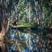 Tom Jefferson, Carmichael River