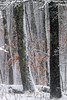 Goodbye winter! (cheryl.rose83) Tags: winter snow trees snowing stonewall